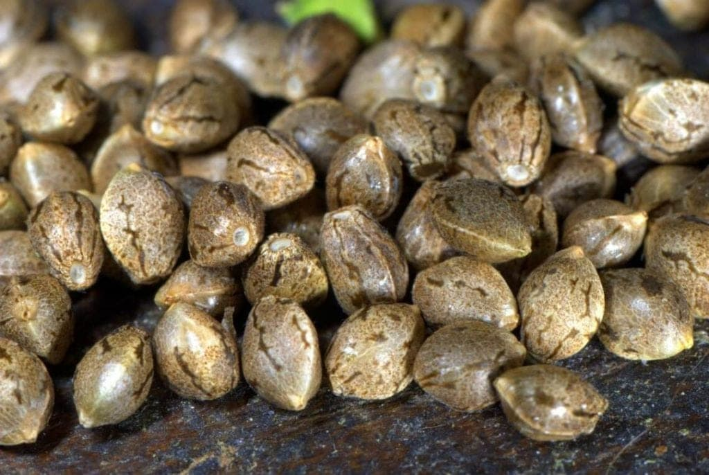 Marijuana Seeds image