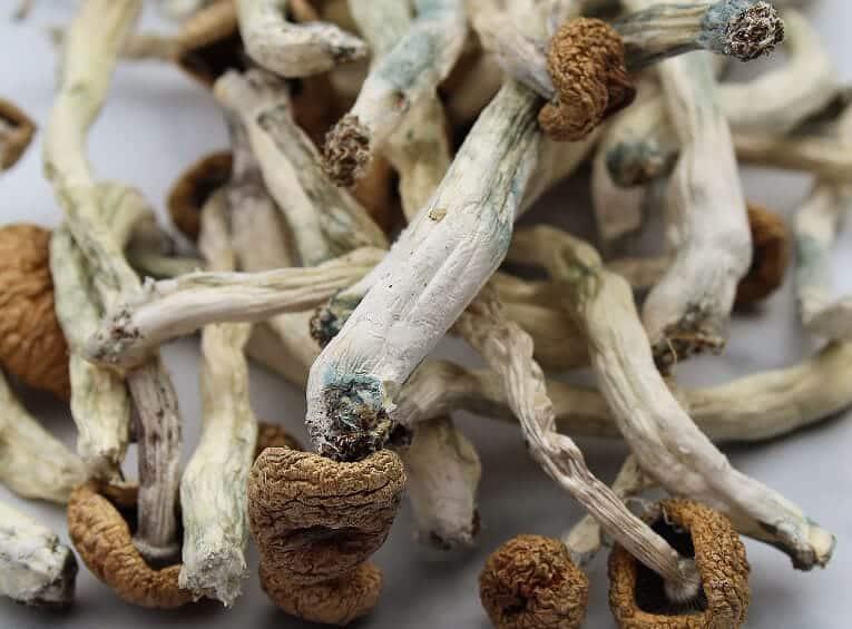 Magic Mushrooms-Max-Quality image