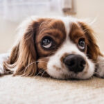 The Best Ways To Give CBD To Your Dogs-Max-Quality image